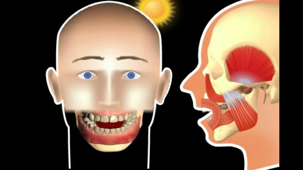 Aparatul dento-maxilar