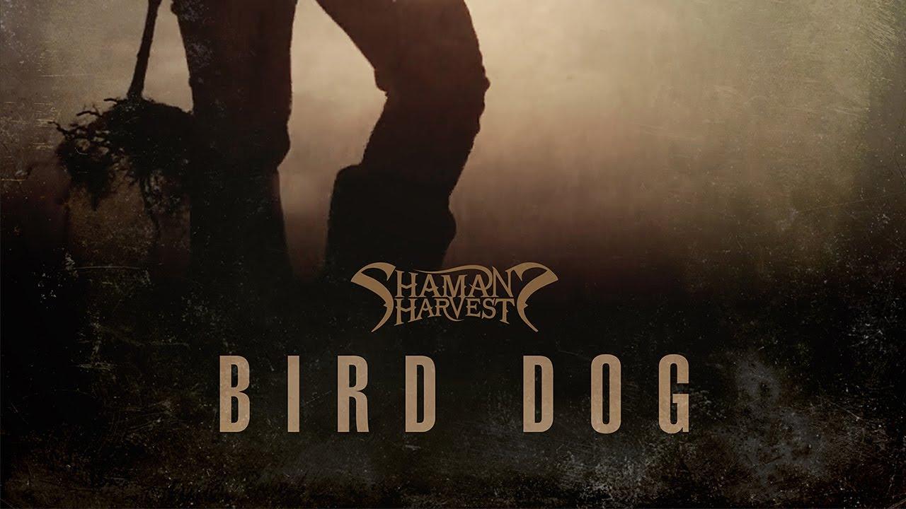 VIDEO OF THE WEEK: SHAMAN'S HARVEST 'BIRD DOG'