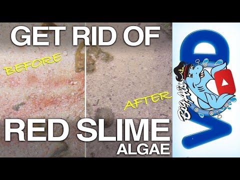 How To Get Rid Of Red Slime Algae | BigAlsPets.com