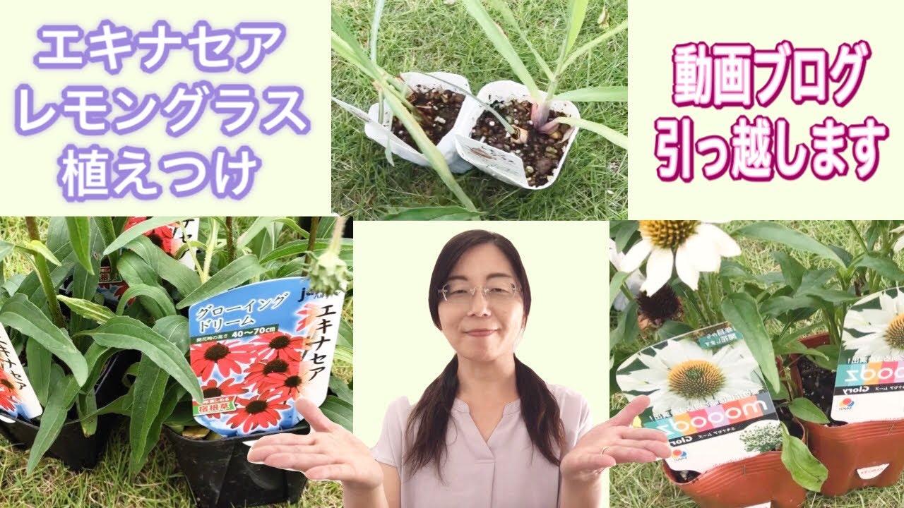 【動画ブログ】引っ越します♪〜エキナセア&レモングラス植え込み