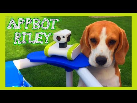 Funny Dog Toy Critics 'AppBot RILEY' Episode #13
