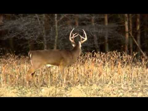 Hunting Whitetails In Iowa During Shotgun Season PTAH_1224