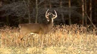 Hunting Whitetails in Iowa during Shotgun Season PTAH_1224