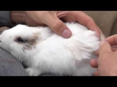 Zibbe Oder Rammler Geschlechter Bei Kaninchen Richtig Erkennen Youtube