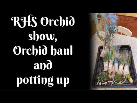 RHS Orchid show, Orchid haul and potting up