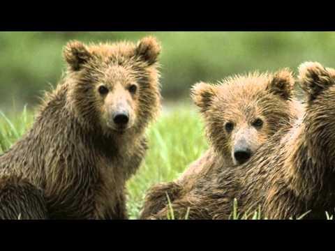 Pluszowe Niedźwiadki -