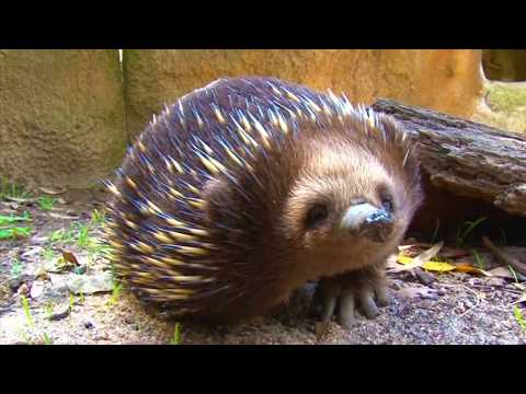 Melbourne Zoo | Melbourne Zoo General Admission | Experience Oz
