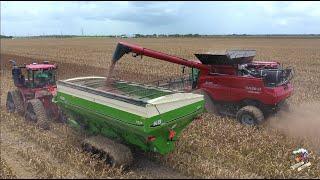 2021 Texas Milo Harvest in the Mud.