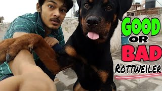 Rottweiler Is Dangerous For 1st Time Owner ?? || Things You Should Know About Rottweiler ||