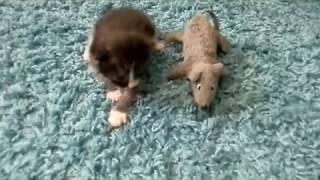 Котенок Том лежит и ждет кошечку маму Дуняшу)