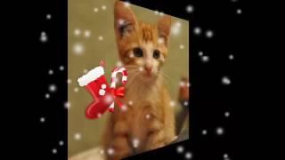 Картинки рыжих котов