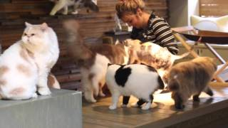 Video JAPAN DAY 4: CAT CAFE AND OSAKA AQUARIUM download MP3, 3GP, MP4, WEBM, AVI, FLV April 2018
