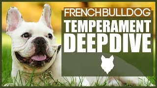 Everything You Need To Know  FRENCH BULLDOG TEMPERAMENT