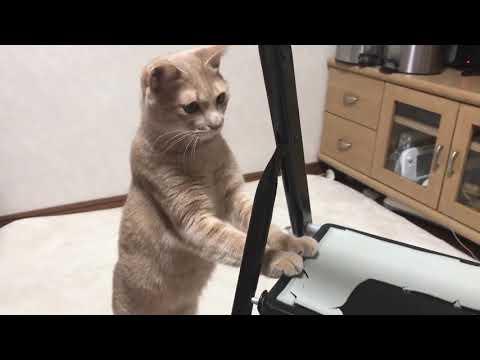 カメムシの臭いが手についてしまった猫w