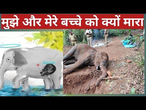 Kerala: Pregnant Elephant Killed After Being Fed Cracker-Filled ...