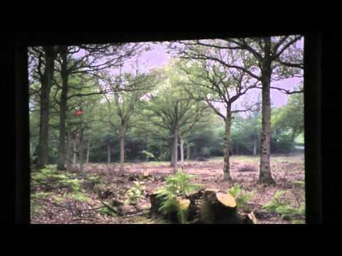 Sheffield's Woodland Heritage - an illustrated talk by Prof. Mel Jones