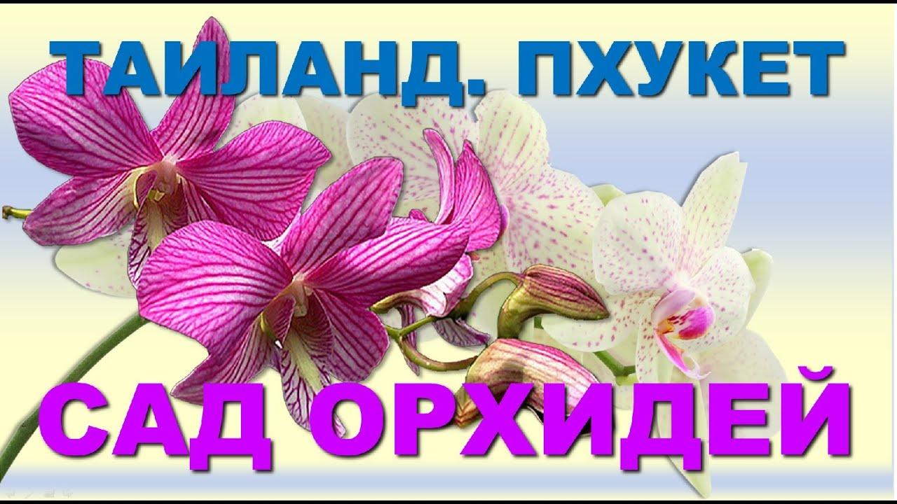 Таиланд. Пхукет. Сад орхидей. Крупные фото. - YouTube