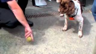 Dyfed Powys Police Dog Squad Training Demo.m4v