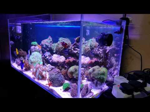 Aquarium marine Qatar