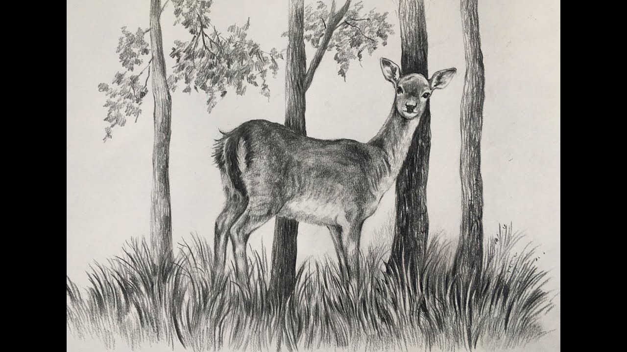 Draw and shade a deer pencil drawing of a deer animal drawing