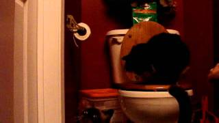 Cat Plops in Toilet - 3 months 3 days Cat Toilet Training Boot Camp
