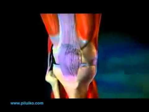 Онкология легких симптомы лечение