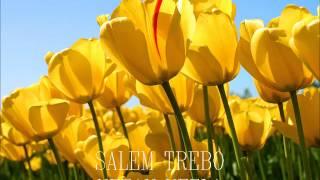 SALEM TREBO - Vezak vezla