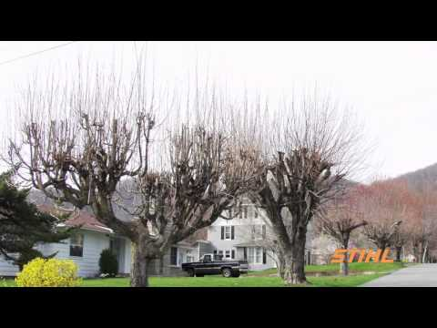 Tree Care Tips: Tree Topping