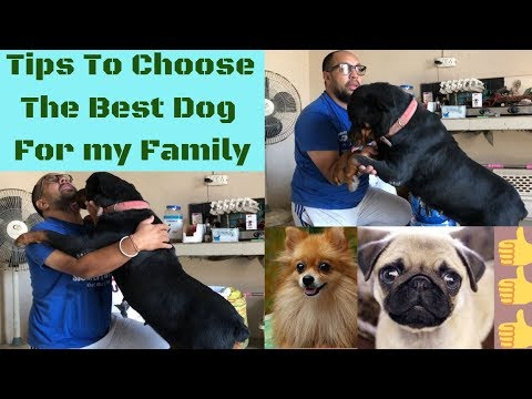 tips-to-choose-the-best-dog-for-my-family