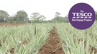Prickly Pineapples: from farm to fork