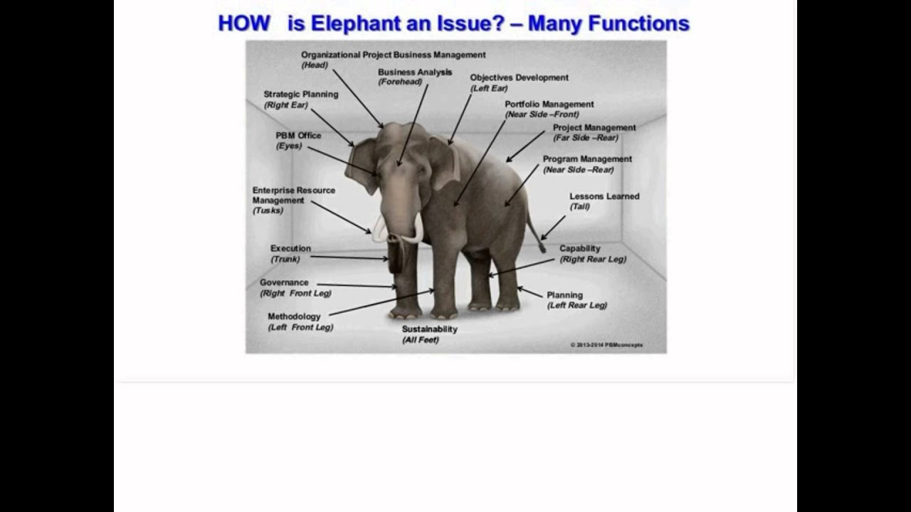 The Elephant in the Executive Suite Project Management and the PMO ...
