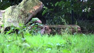 Two Cheetah Cubs in Fota Wildlife Park, Cork Need A Name