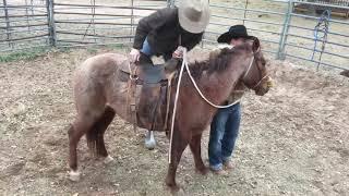 Texas Bronc Ride/Colt Starting