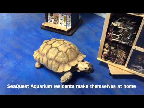 New SeaQuest Interactive Aquarium opens in Las Vegas