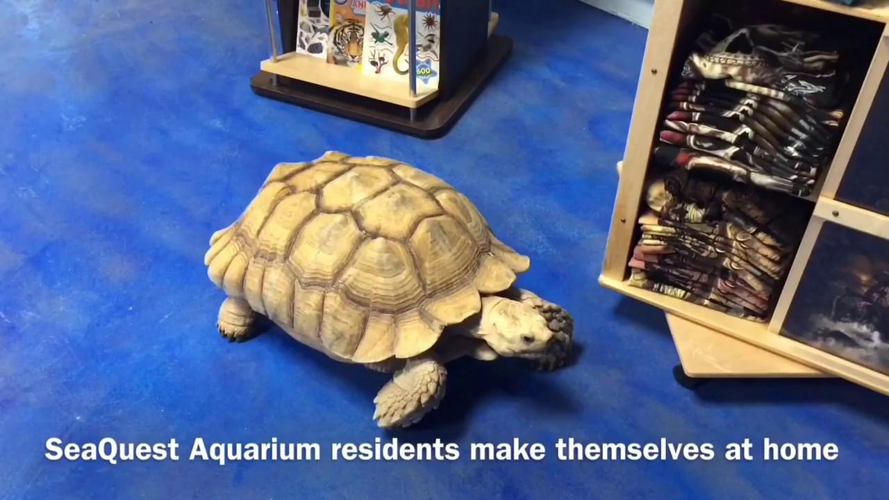 New Seaquest Interactive Aquarium Opens In Las Vegas