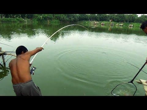 Huge Catla Fishing Videos By Fish Watching