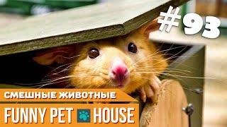 СМЕШНЫЕ ЖИВОТНЫЕ И ПИТОМЦЫ #93 АВГУСТ 2019 | Funny Pet House