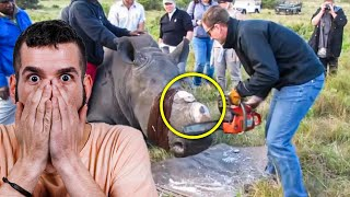 When Vets Cut Off A Rhino's Horn To Foil Poachers, They Found A Strange Symbol Running Through It