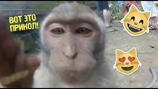 Смешное видео про животных.