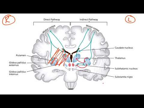USMLE Step 1 Neurology - Basal Ganglia & Dopaminergic Pathways
