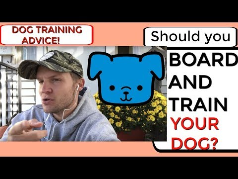 Should you Board and Train your dog? Dog Training advice with America's Canine Educator