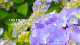 山本潤子 - 世界に一つだけの花