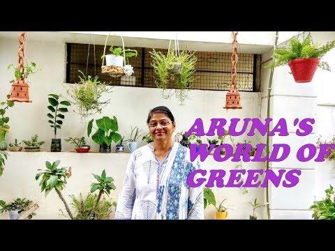 Aruna S Kitchen Garden Hanging Garden Bonsai Tree Creative