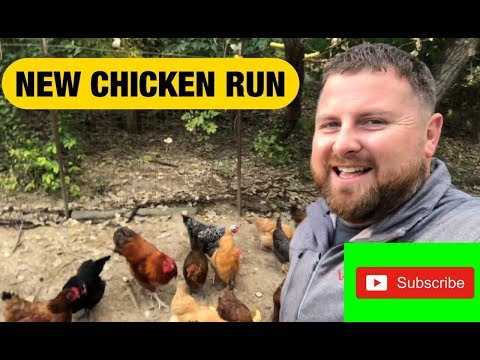 chicken-run-expansion
