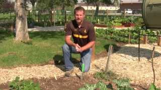 Watering Your Vegetable Garden