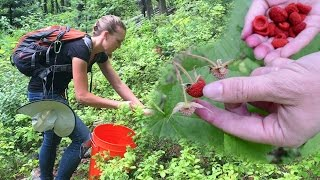 Foraging for Wild Edible Plants & Bartering with Free Forest F…