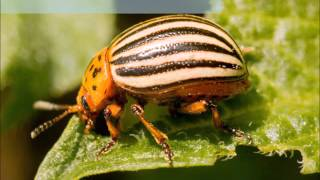 Choroby i szkodniki roślin - pierwsze 20 - zdjęcia   infoUprawa