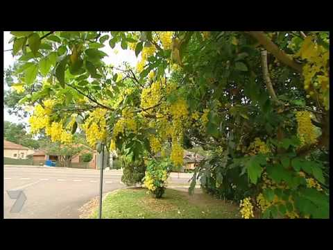 Better Homes And Gardens Tv Passionfruit Youtube
