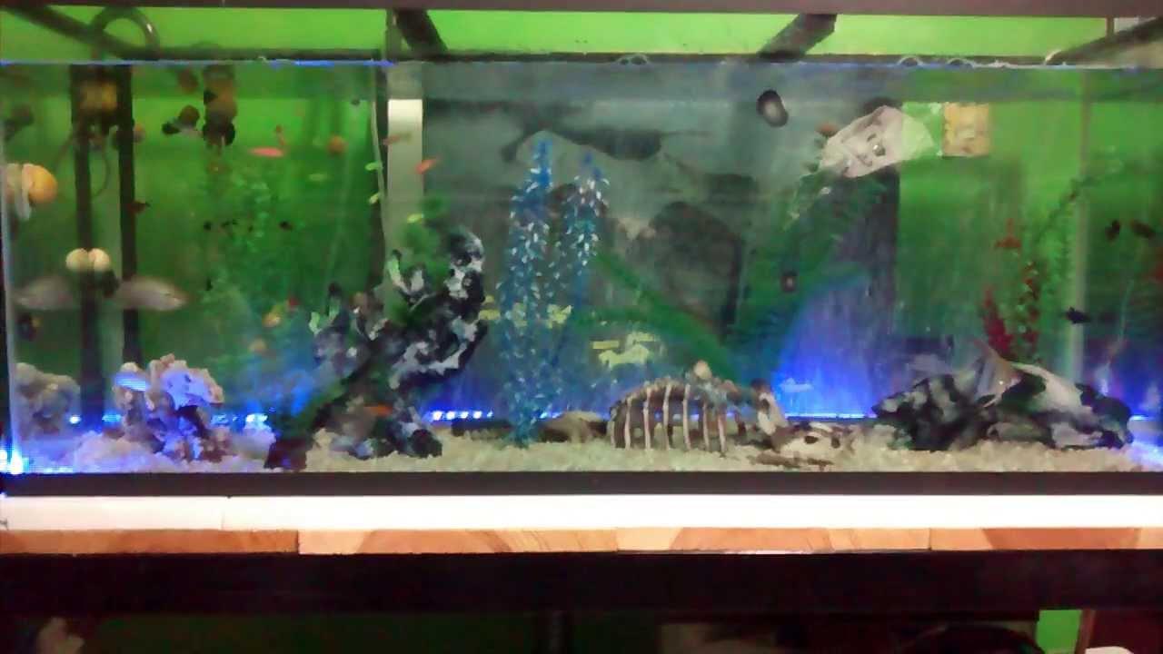 Mi acuario comunitario 200 litros youtube for Acuario comunitario