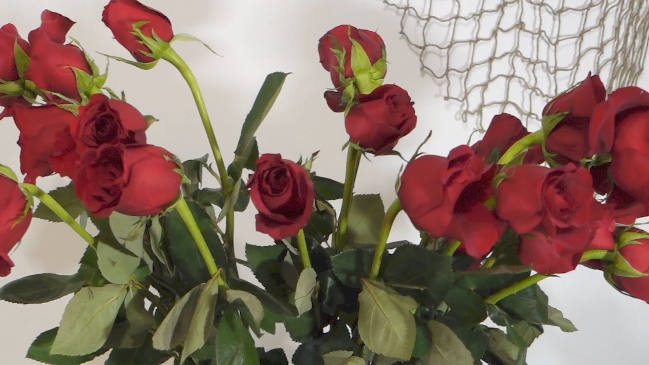 How To Revive Wilted Roses Youtube